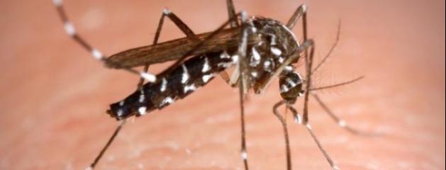 attention les moustiques tigres sont de retour comment les viter vid o jean marc morandini. Black Bedroom Furniture Sets. Home Design Ideas