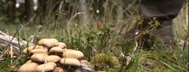 Toxiques ou comestibles comment diff rencier les champignons conseils en vid o jean marc - Comment cuisiner les champignons ...